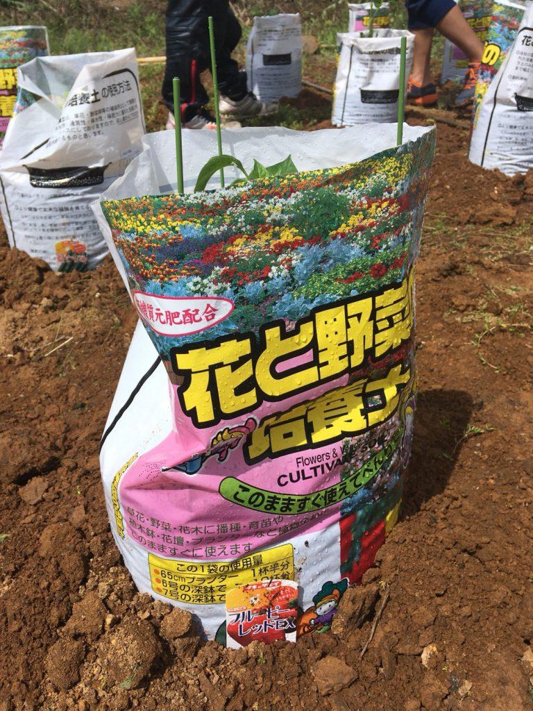 家庭菜園:袋栽培で再スタート