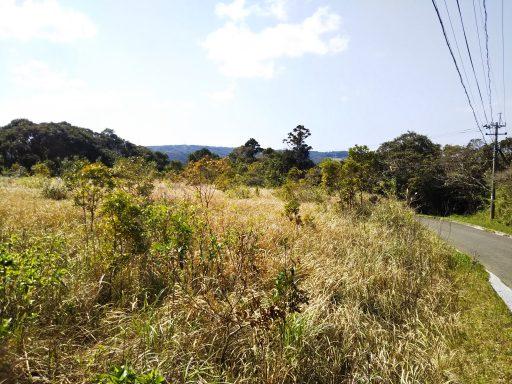 ◆【ザワワ村】耕作放棄地で #マイDASH村 に挑戦するザワワ村開拓プロジェクト(まとめ記事)