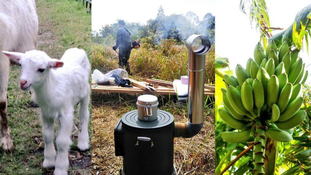 ◆【ザワワ村】耕作放棄地で #マイDASH村 に挑戦するザワワ村開拓計画【まとめ記事】