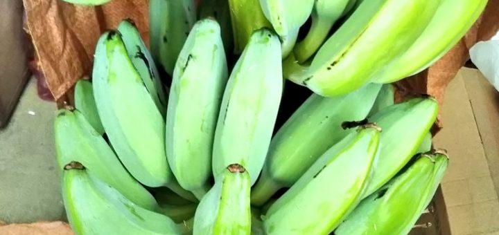 【ザワワ村】開拓物語 第43話「角の洗礼と対策&バナナ収穫自己ベスト更新」