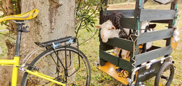 【ザワワ村】開拓物語 第49話「年末年始はヤギのホームステイ」