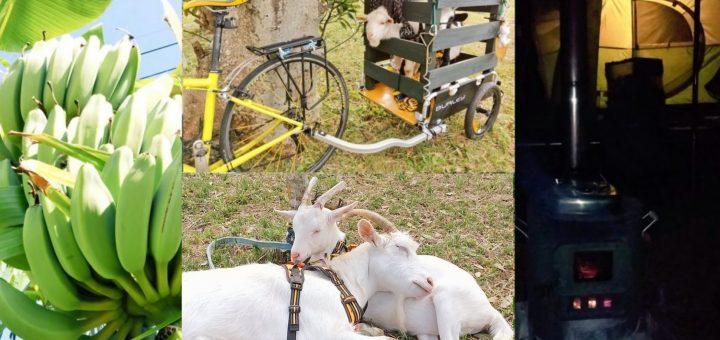 ◆【ザワワ村】耕作放棄地で #マイDASH村 に挑戦するザワワ村【まとめ記事】