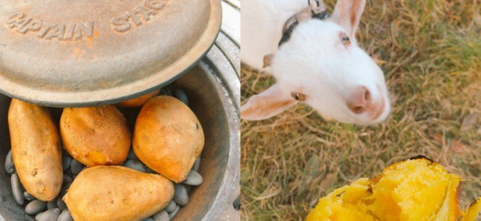 【ザワワ村】開拓物語 第70話「もう師走。石焼き安納芋をヤギと分け分けして年越し」