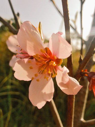 【ザワワ村】開拓物語 第74話「3月は旅立ちの季節」