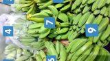 バナナ露地栽培の記録🍌:2020シーズン(収穫3年目)